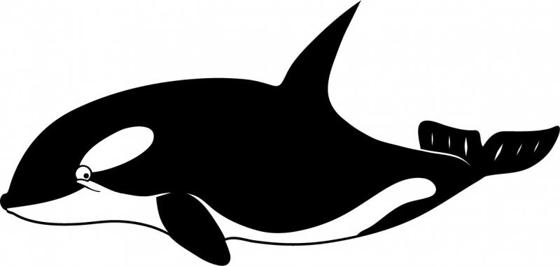 DĚTSKÉ samolepky na zeď - Dětské samolepky na zeď - Mořský svět - Kosatka